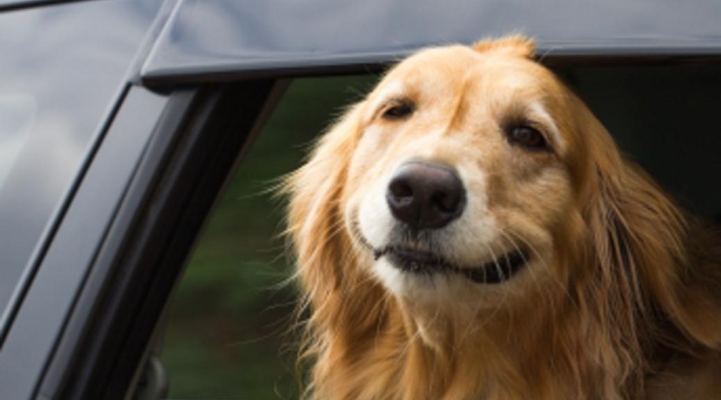 Dog-1038x576